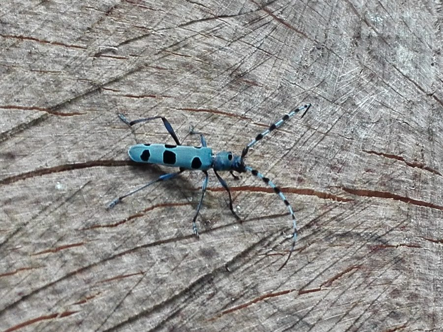 Il meraviglioso mondo degli insetti